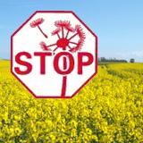 B-Free insektnet og solafskærmning - Myggenet pollenfilter